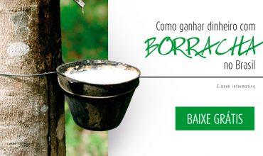 capa-ebook-borracha-brasil