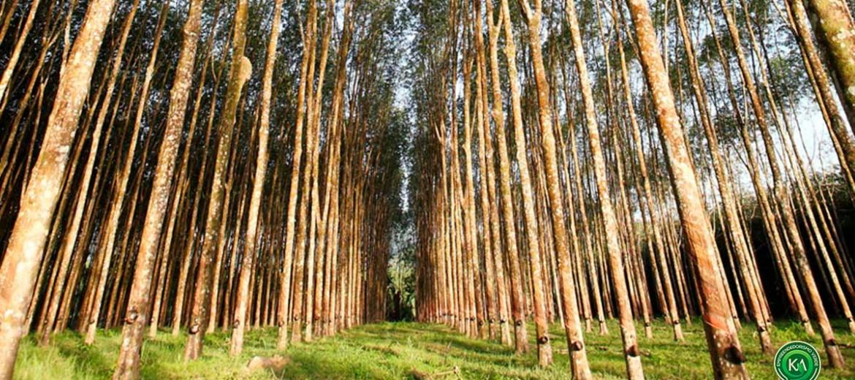 florestas-produtivas-kaiser-agro